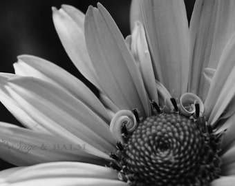Black and white floral photo print, floral photography, black and white flower, floral print, romantic, daisy, dreamy, abstract, petals