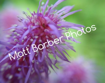 Macro Purple Flower Photo Print, Macro Astilbe Photo Print