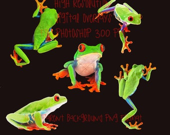 Green tree frog overlays for photoshop, transparent background, high resolution INSTANT DOWNLOAD