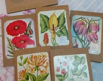Botanical mini notecards set of 5