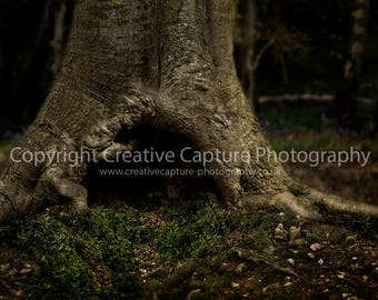 Newborn Digital backdrop / background / woods / Spring/ summer / tree