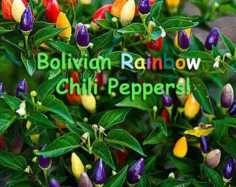 Bolivian Rainbow Chili Pepper Seeds *VERY RARE*