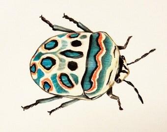 Original Beetle Art, Exotic Bug illustration, Colored Pencil Art, Realistic Insect, Scarab Artwork, Entomology, A5 Wall Art, Nature Lovers