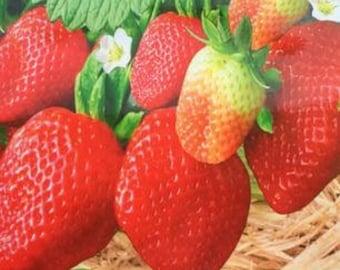 Rare Heirloom Organic Oblate Red Big Sweet Strawberry Seeds Original Pack 40 Seeds
