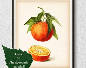 Citrus art, Illustration, Orange print, Antique botanical art, Kitchen printables, Citrus print vintage, Printable art, Digital print, #25