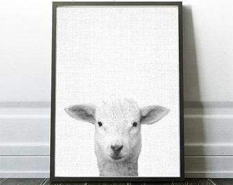 Lamb Prints , Nursery Animal Print, Farm Animal, Animal Decor Wall Art, Nursery Decor, Printable Download, Nursery Art, Farm lamb, Sheep