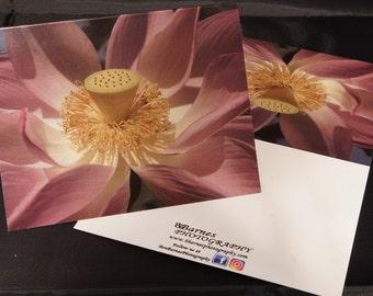 Pink Lotus Flower 1 - Ben Barnes Photography