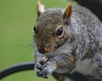 Maine Photography; Squirrel; Birdwatching; wildlife;