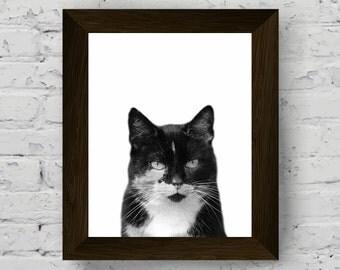 animal print nursery, animal portrait, cat photography, cat print, black white wall art prints, baby room decor, cat digital download