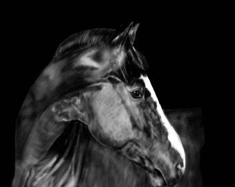 "Fine Art Print - Horse ""Looking Back"""