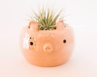 Piggy Monomal (Pig planter, animal planter, monocle planter, cute pot, air plant)