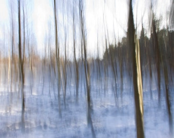 Instant download  abstract silver birch photograph