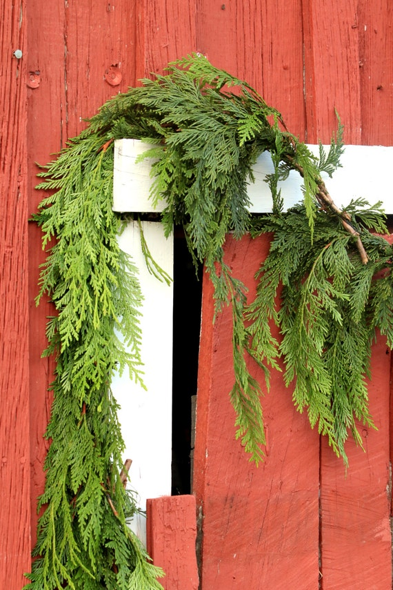 Christmas garland fresh cedar real greenery