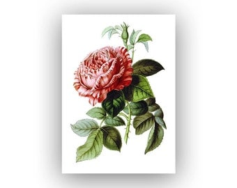 Red Flower Evergreen Plant Drawing Print - 5x7 inches - Archival Giclee Photo Prints