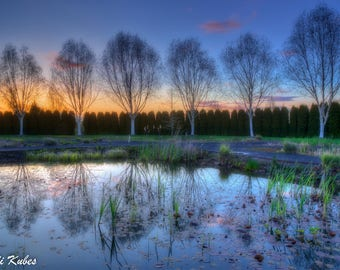 Spring Reflections Canvas