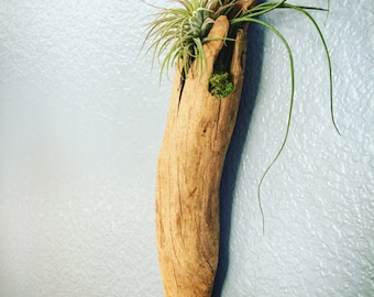 Hanging driftwood planters