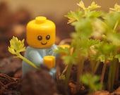 Baby Herb Garden