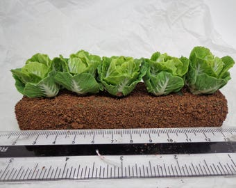 1:12th Scale Growing Cabbages Dolls House Miniature Garden