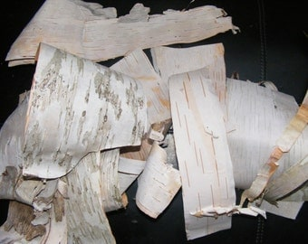 12 Pieces of Birch Bark Scraps