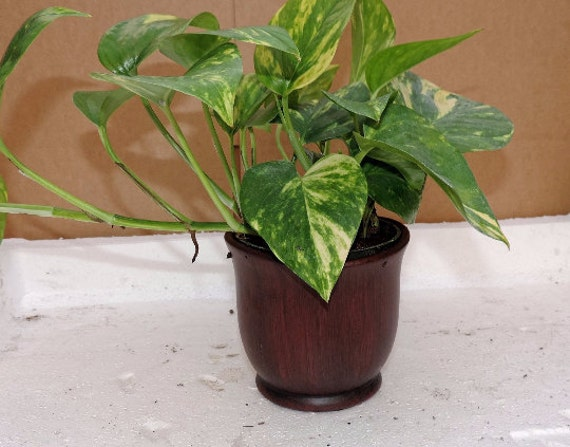 10 Inches Ceramic Pot Plants Etsy