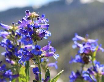 Wildflower; Photography; 5X7, 8X10, etc.