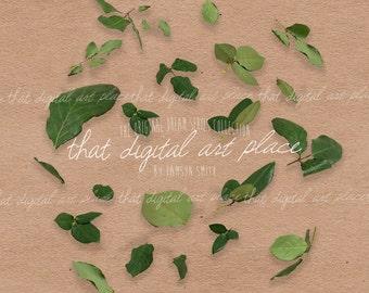 Green Leaf PNGs / Rose Leaf Overlay / Summer Overlay/ Digital Leaves