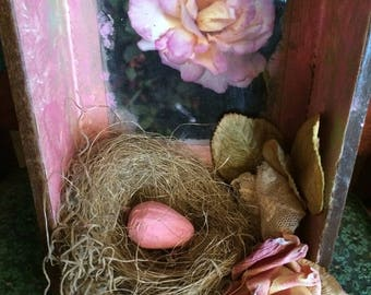 Nest with Egg Shadowbox