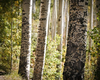 Aspens Graffiti