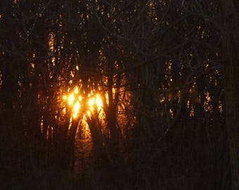 Sunset through the trees.sublime,beautiful,tranquil,lovely,brilliant,dusk,day end,sinking,sun