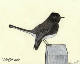 Bird Charcoal Drawing, Giclee Print 8x10, Bird Art, Wall Art