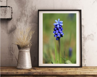 Spring, blue hyacinth, Photo, Photoprint, Art, Printart - Poster, Acrylic, PVC foamboard, canvas print