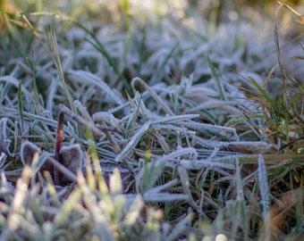 Frosty Grass Photo Print (8x10)