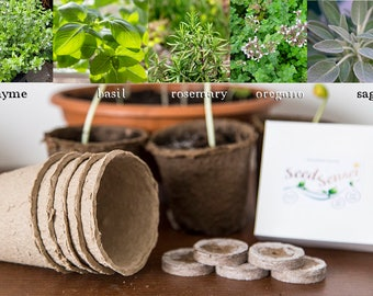 Plant seed growing kit, herb mix, Mediterranean herbs thyme, basil, rosemary, oregano, sage for Kitchen, Balcony, Windows, housewarming gift