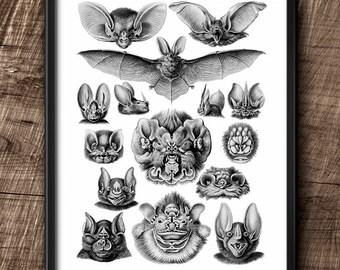 Chiroptera · Instant Download · Bats · Vintage · Wall · Printable · Digital File #104