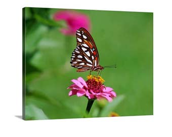 Butterfly Canvas, Gallery Wrap, Photography, Nature Photography, Pink Flower, Green, Orange, White, Pink, Wall Hangings, Home Décor
