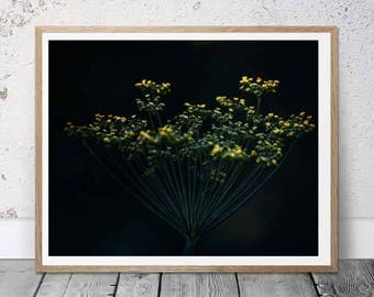 Fennel - Modern Floral - Digital Download Photo, Floral Print, Art, Nature Art, Nursery Art, printable download, wall art, botanical art