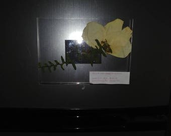 Magnet: Fortune w/ Pressed Flower and Fern