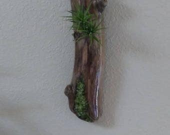 One of a kind air plant driftwood and precious gemstones.