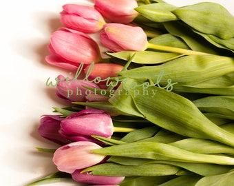 Spring Tulip Stock Photo