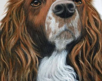 springer spaniel painting, 11x14, oil