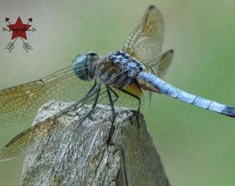 Dragonfly on Fence Post - Photographic Print