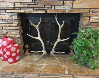 Decor Antler Set 'Great Lines', 6x6 Natural Shed, Real Antlers, Elk, Cabin Decor, Antlers, Shed Antlers,Real Antlers