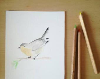 Bird - Robin - watercolor - image
