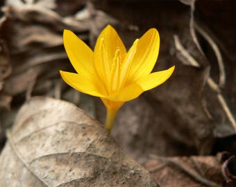 Yellow Flower Nature Printable Digital Download Art Photograph Decor Background Wallpaper
