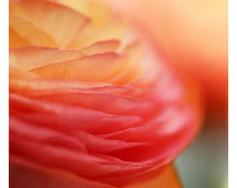 Home Decor - Gift For Mom - Flower Photograph - Nature Photography - Pink Print - Layers - Ranunculus Art - Fine Art Photograph - Oversized