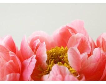 Peony Print - Peony Photograph - Flower Art - Spring Art - Malory - Fine Art Photograph - Floral Art - Botanical Art Print - Pink Peonies