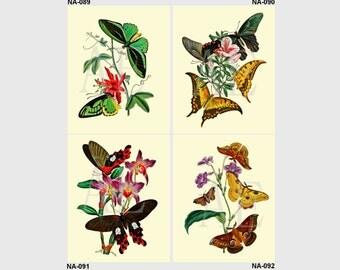 NA089-092 Artistic Ephemera Nature Print - Choose 8x10 or 5x7 - Oriental Entomology by William Smith 1848, Butterflies Moths Flowers