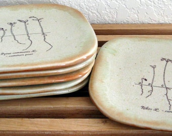 Appetizer Plates -  Set of 6 - Small Plates - Sprouts - Hand Thrown Stoneware Pottery