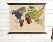 Vintage Map Wall Art, Wine Grapes of the World, Wood Bound Canvas