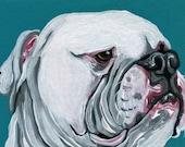 ACEO ATC Original Gouache Painting American Bulldog Dog Pet Art-Carla Smale